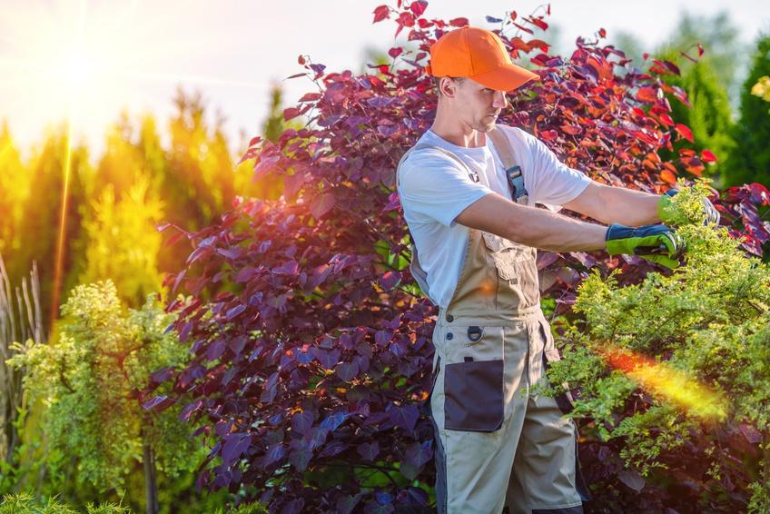 Jardinage et bricolage casap familles casap service la for Service a la personne bricolage